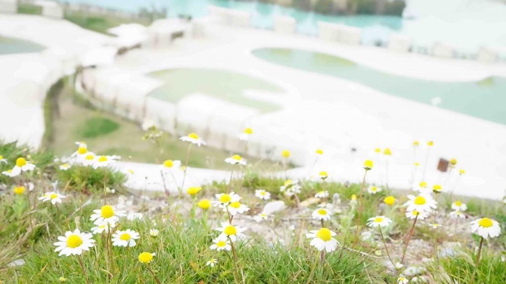 パムッカレと花