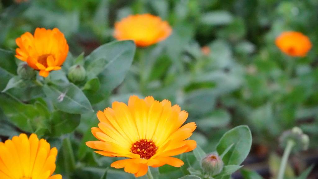 ヒエラポリスで咲く花