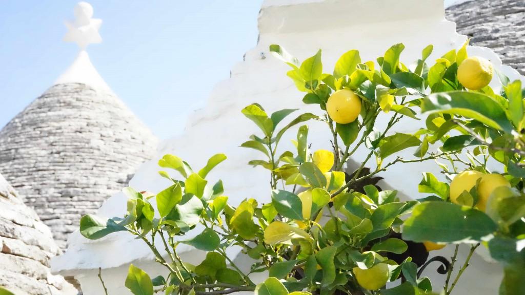 アルベロベッロのレモンの木(イタリア)