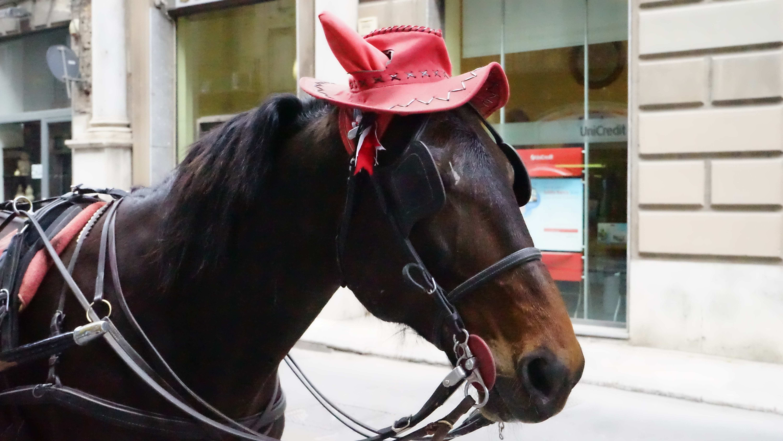パレルモで見かけた馬(シチリア)