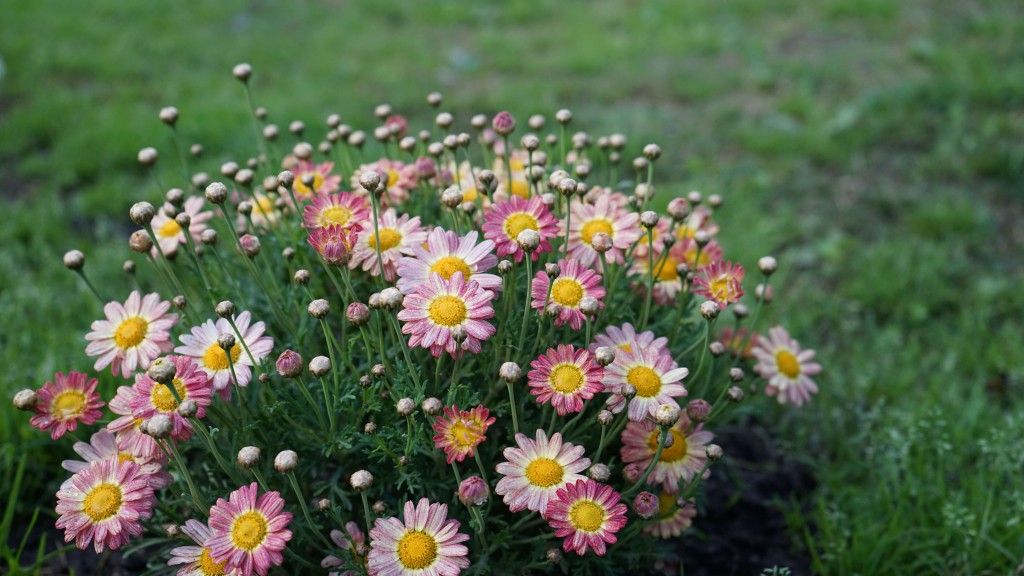 カターニアに咲く花(シチリア)