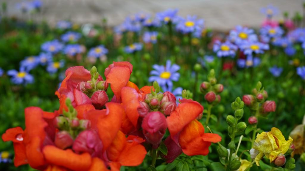 ポジターノで咲く花(イタリア)