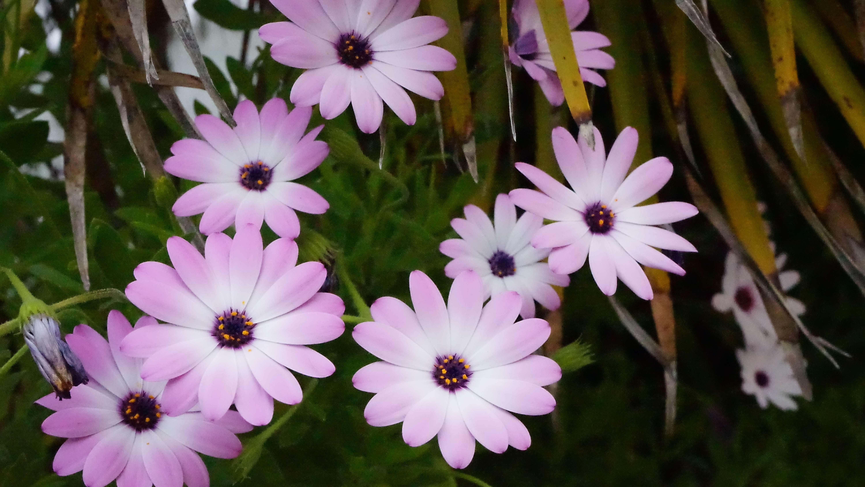 チンクエテッレに咲く花(イタリア)
