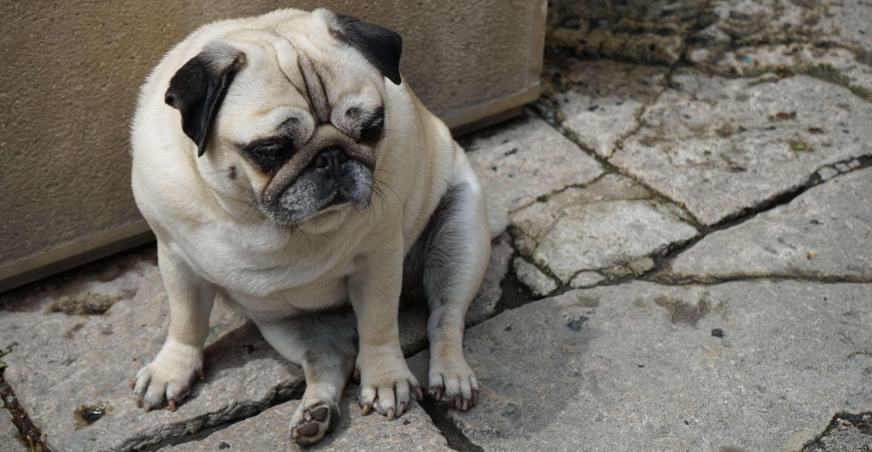 サンマリノ共和国で出逢った犬