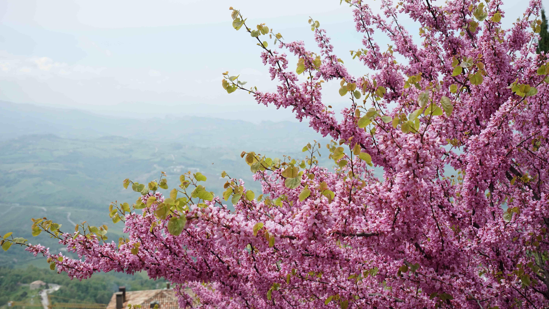サンマリノ共和国に咲く花