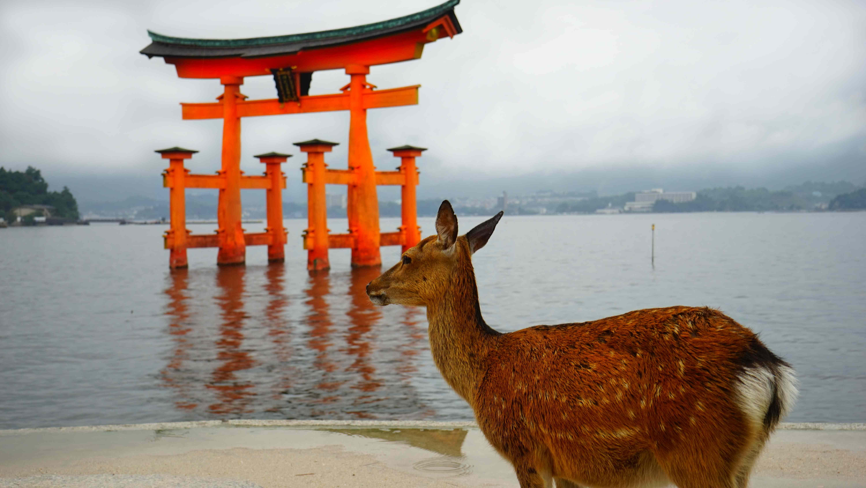 厳島神社・鳥居と鹿(宮島)