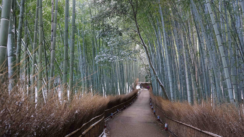 嵯峨野竹林(嵐山)