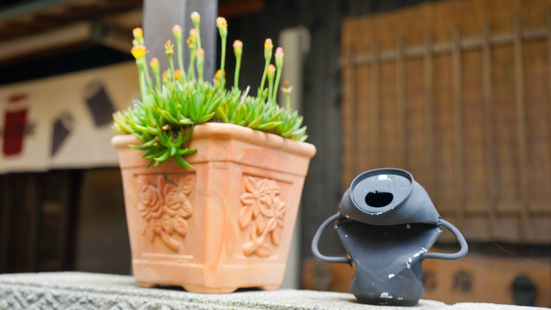 缶アートと植物